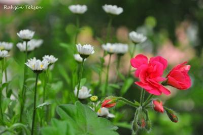 Kur'an'ı kalbimin ilkbaharı kıl Allah'ım!